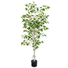 Julian 5 Foot Birch Artificial Tree