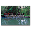 Clydesdales on Green Pond - 16x24 Canvas Art Ready to Hang