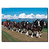 Clydesdales in Blue Sky Mountains - 14 x 19 Canvas